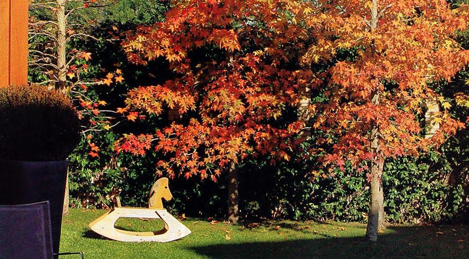 otoño tardor jardin con liquidambar